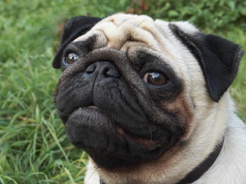 maraz ali'nin köpeği